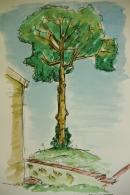 Tree (Pen & Ink)